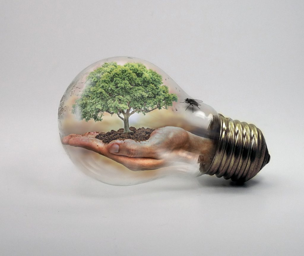 bulb, nature, ecologycurrent